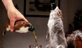 Dead squirrel beer: for when your lemon chiffon pale ale is not quirky enough.