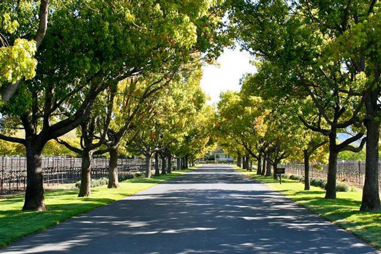 41. St. Supéry Vineyards and Winery, Rutherford, Calif.