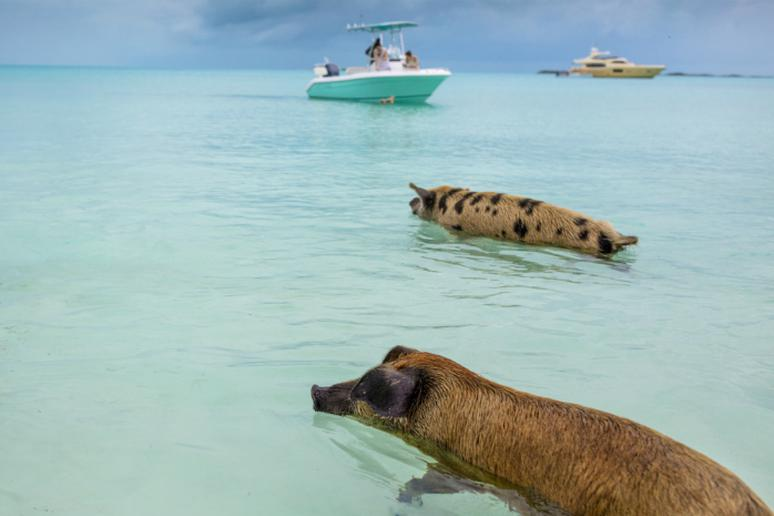 For animal lovers: Visit an island where animals outnumber people