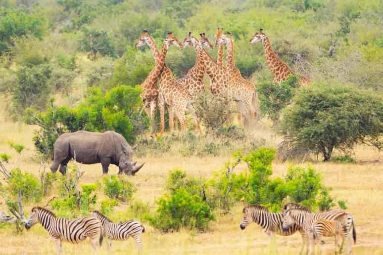 See the 'big five' in South Africa