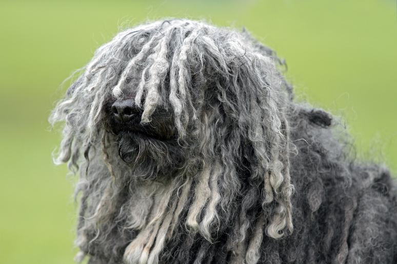 Breeds you didn't know existed