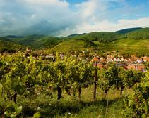 The Good Thing About Global Warming Is That It's Making French Wine Even Better, Researchers Say