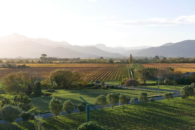 Indulge in locally-produced wine