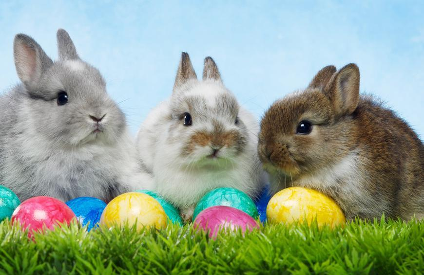 7 Things You Never Knew About The Easter Bunny