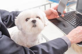 Top dog friendly companies to work for