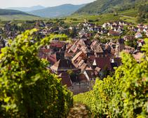Tasting the Alsace Region's Dopff & Irion Wines