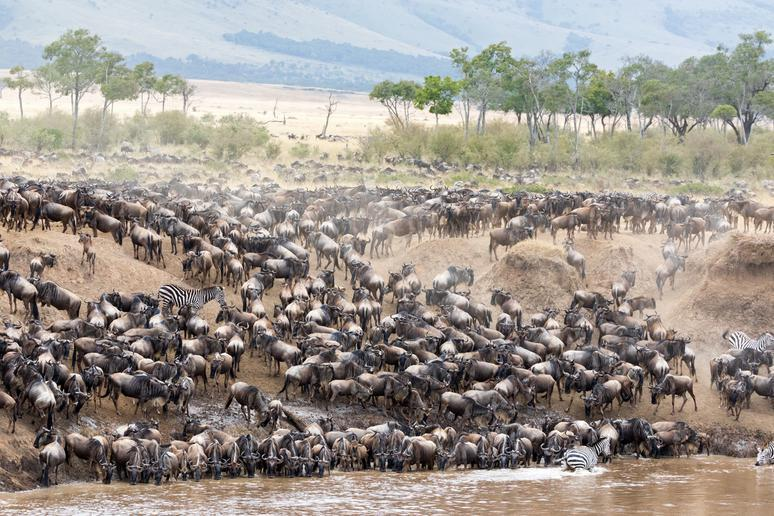 Witness the great migration in Tanzania