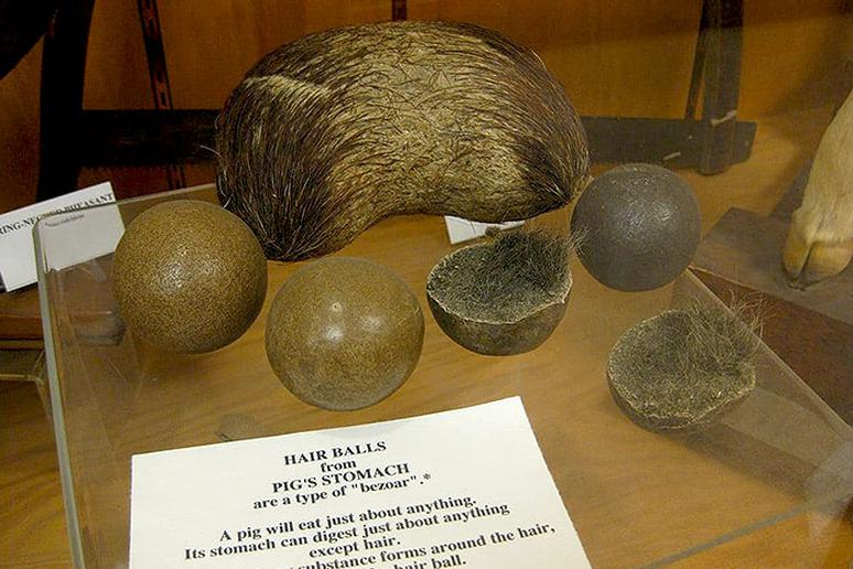 Oregon - World's Largest Pig Hairball