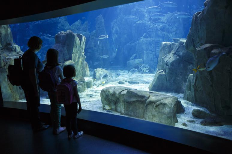 Spend the day at the zoo or aquarium