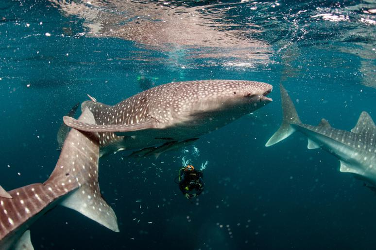 Swim with the sharks in Mexico