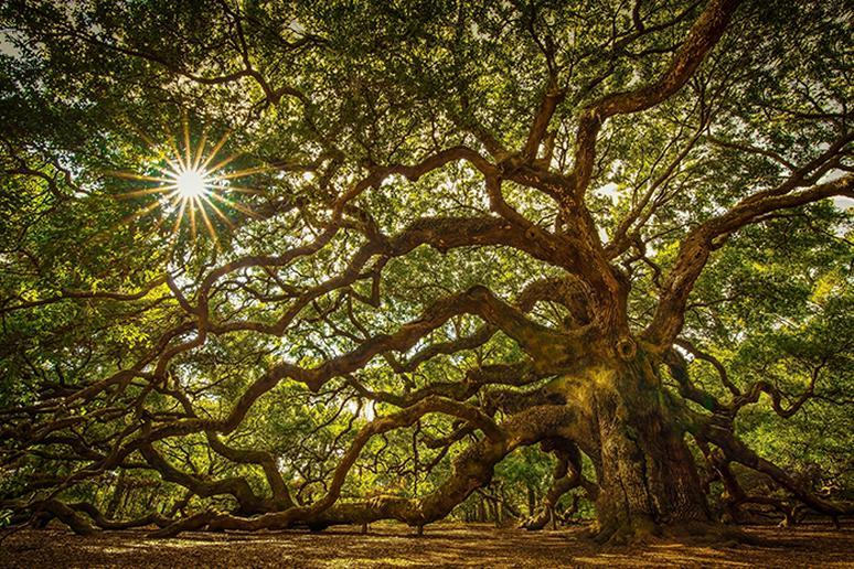 South Carolina – The Angel Oak