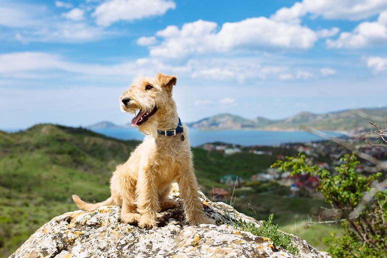 Dogs That Are Definitely More Adventurous Than You