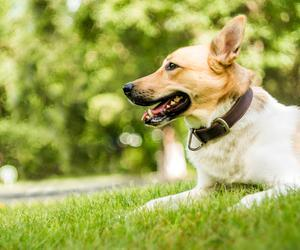 The 50 best dog parks in the US