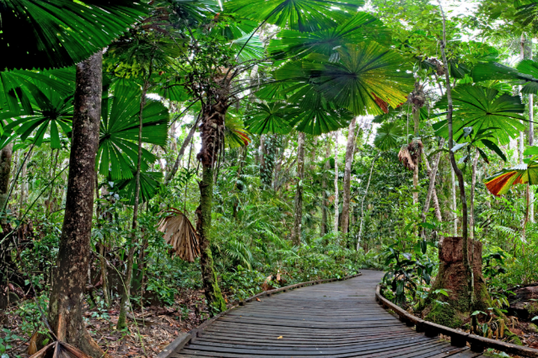 Rainforest Trike Tours