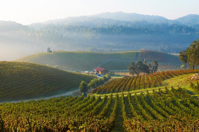 Best American Wineries