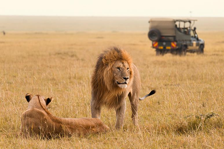 See magnificent predators on a safari
