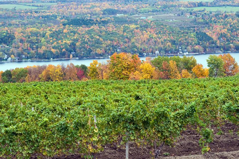 New York – Explore vineyards in the Finger Lakes region