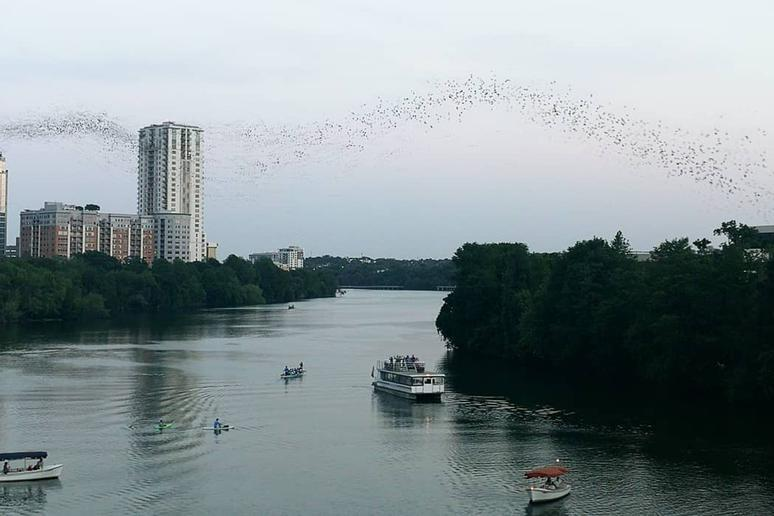 Texas: Bat Watching Sunset Cruise (Austin)