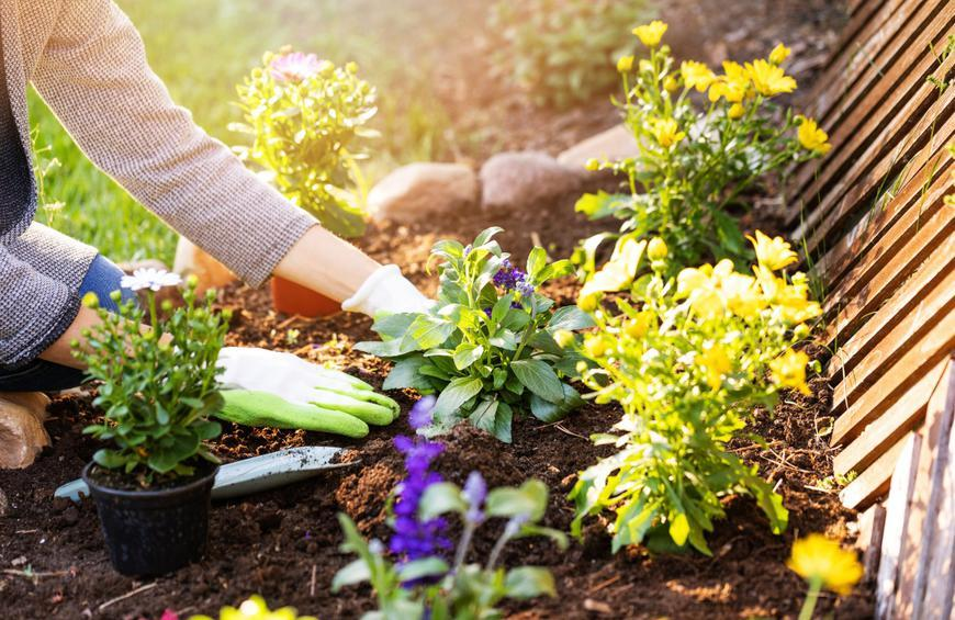 Utilize companion planting from 21 simple gardening tips for beginners -  The Active Times