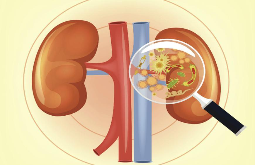 13 Signs And Symptoms You Might Have A Kidney Infection Slideshow The Active Times
