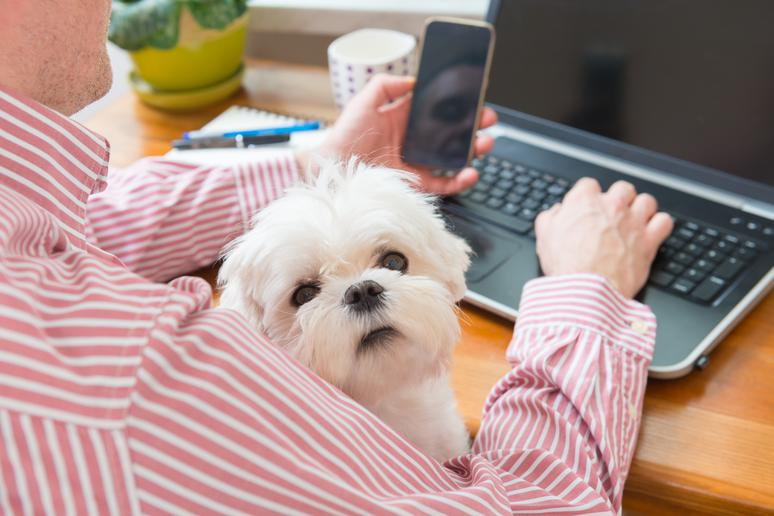 Do's and Don'ts When Taking Your Dog to Work
