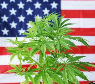 Marijuana state of the union: Cannabis laws in every state
