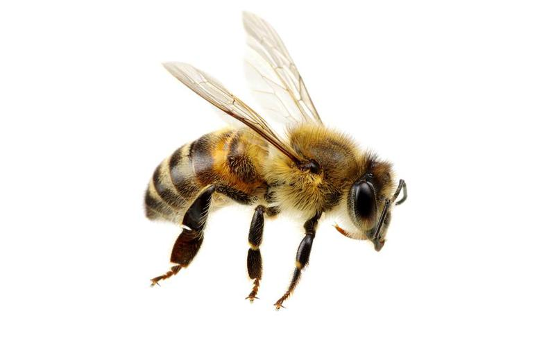 Scientists Nationwide Are on High Alert for Parasite That Turns Honeybees Into 'Zombies'