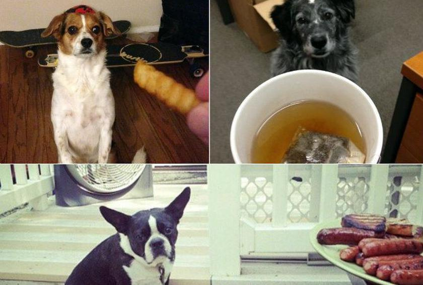 Dogs Who Love Food