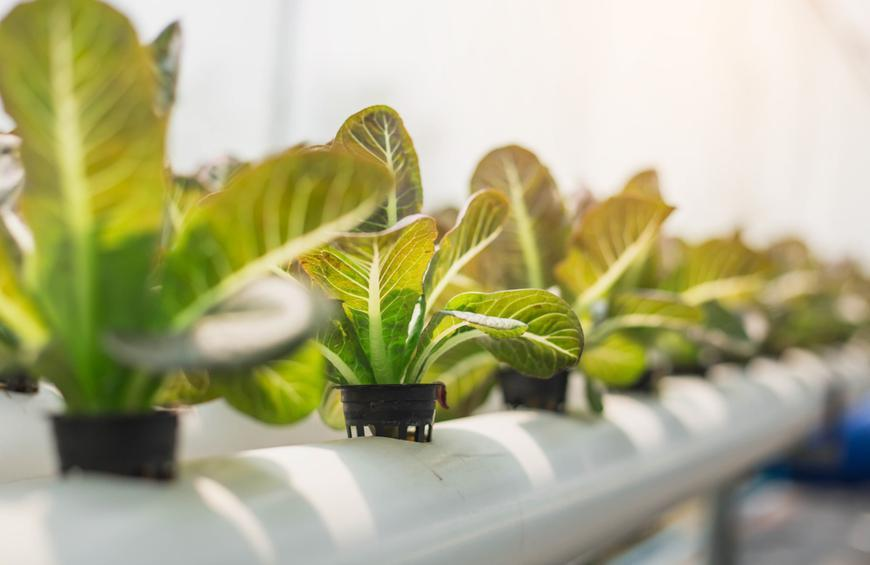 How to Start a Hydroponic Garden | Slideshow | The Active Times