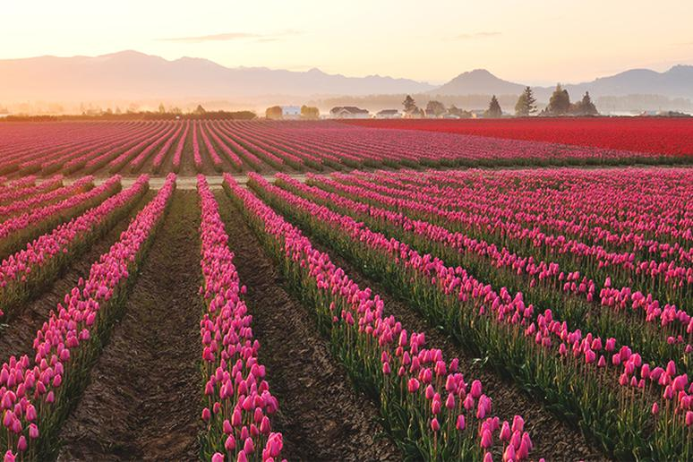Washington – Skagit Valley