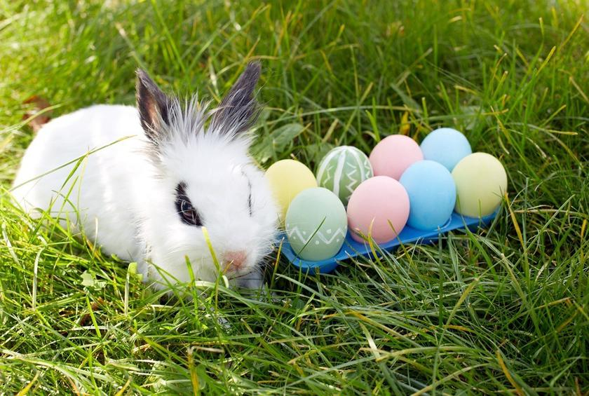 The 12 best easter egg hunts for all ages gallery bunny treasure map maxwellsz