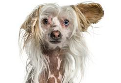 15 Dog Breeds You Didn't Know Existed Until Now