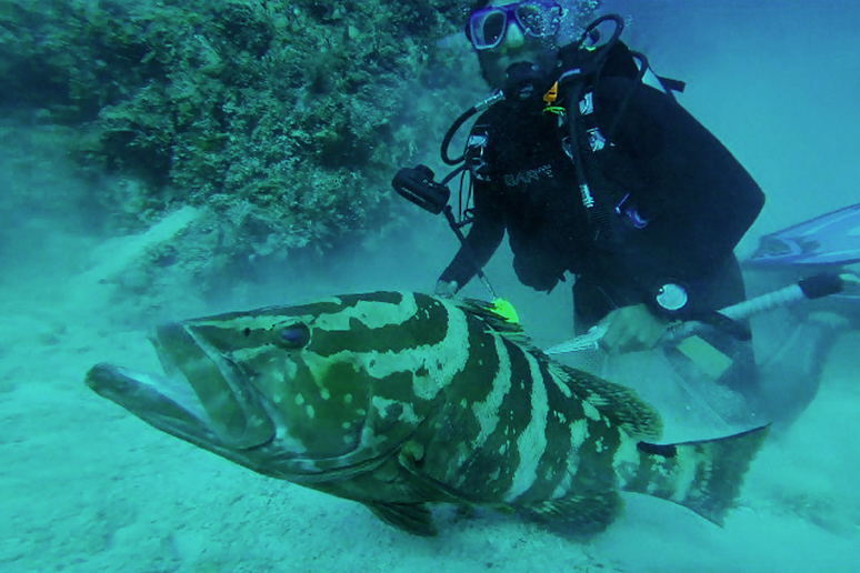 Bahamas Grouper Research Expedition
