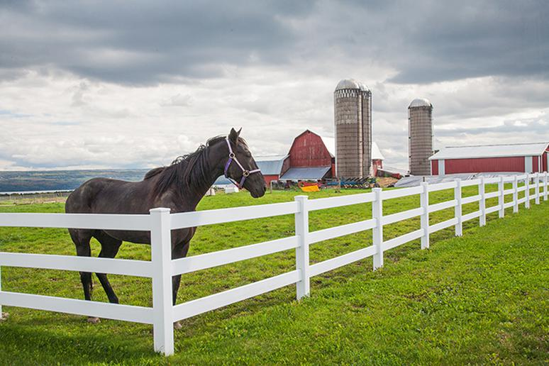 Ride a horse in the Finger Lakes Region of New York