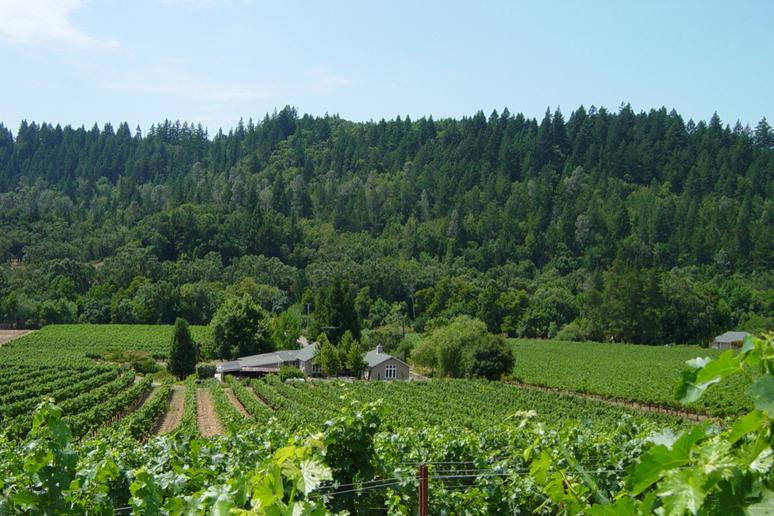 46. Neyers Vineyards, St. Helena, Calif.