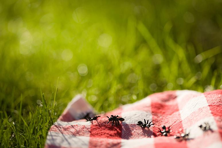 10 Foods That Keep Bugs Away From Your Picnic