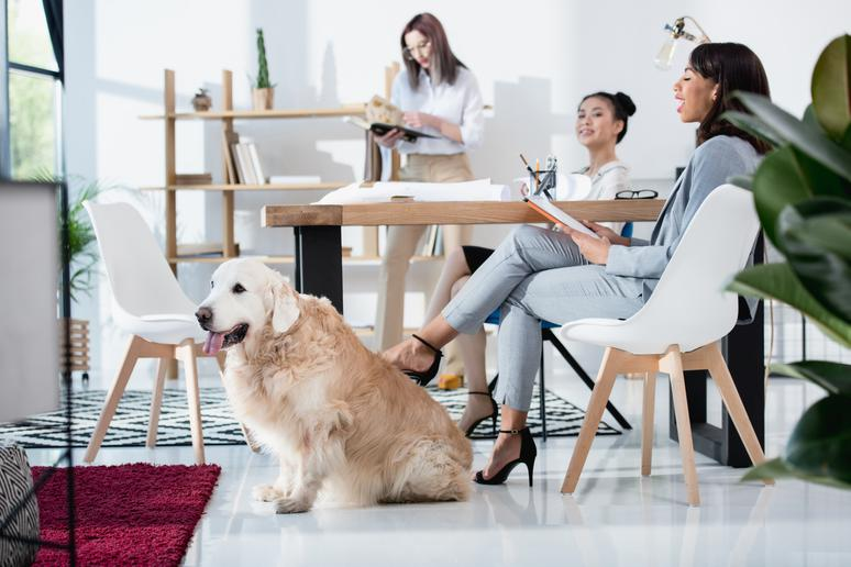 Don't: Force your dog on your coworkers