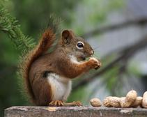 Environmentalist Eats Squirrel During News Segment on Meat Ethics