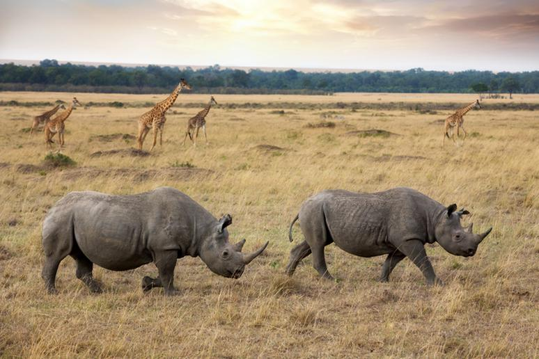 Photos of Rhinos in the Wild