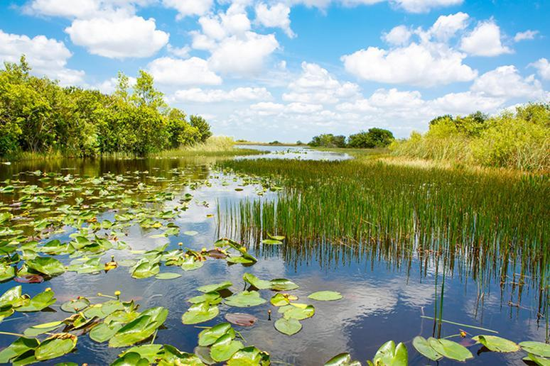 Florida – The Everglades