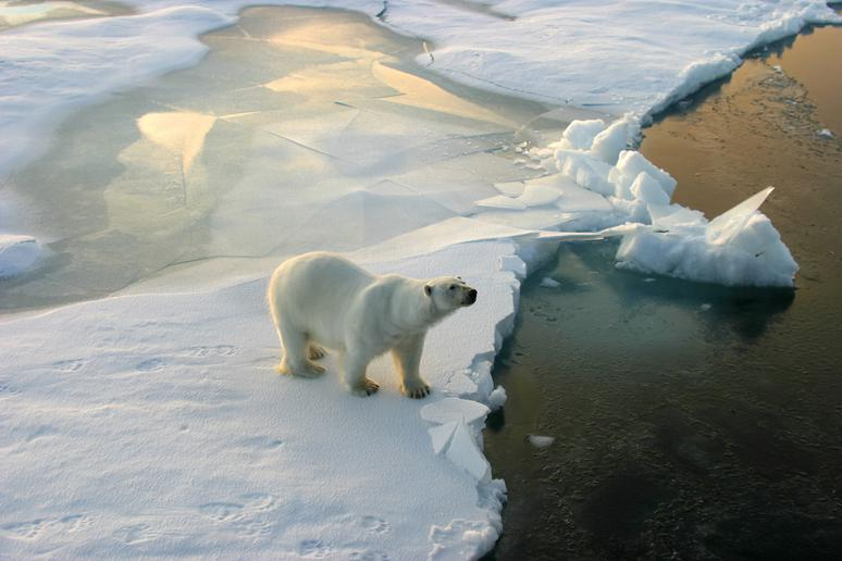 19 Things You Never Knew About the North Pole