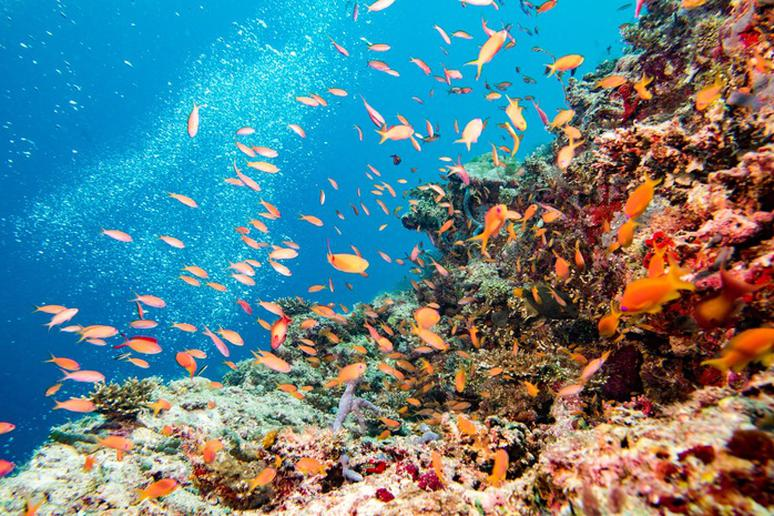 Dive and snorkel in the Great Barrier Reef