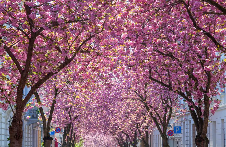 The Most Instagrammable Cherry Blossom Spots Slideshow The Active Times