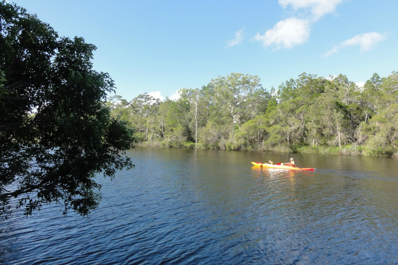 Kayaking in the Australian Everglades