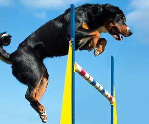 The world's most athletic dog breeds
