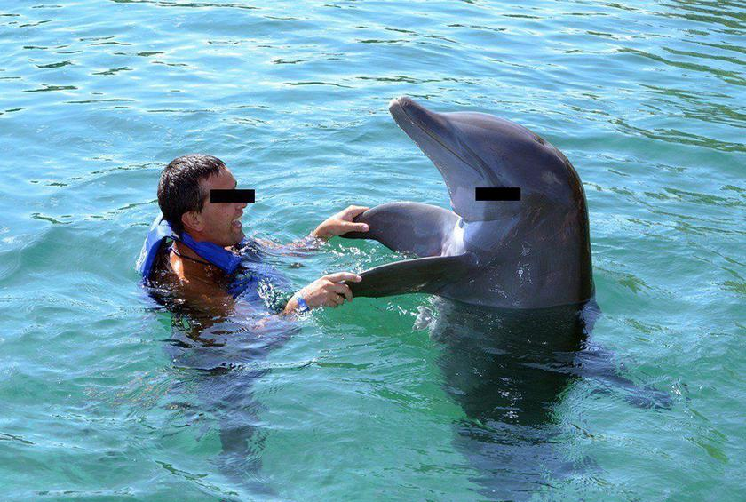 Is It Ethical to Swim With Dolphins?
